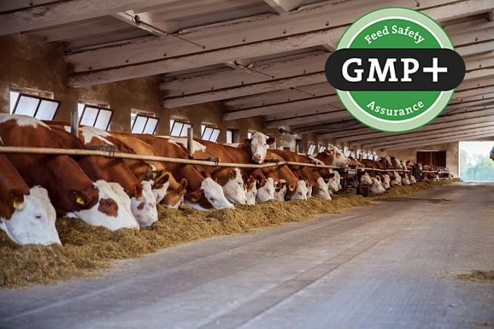 Валідація стандартів GMP і GMP +